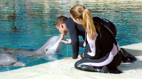 Dolphin kissing trainer within Siegfried and Roy's Secret Garden and Dolphin Habitat in Las Vegas