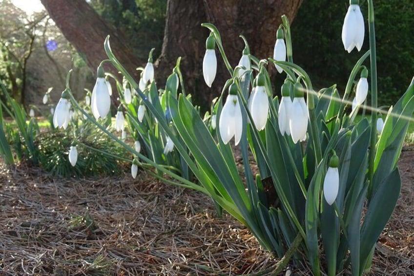 Skip-the-Line: Botanic Garden Entry Ticket