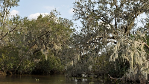 Airboat Adventure in New Orleans