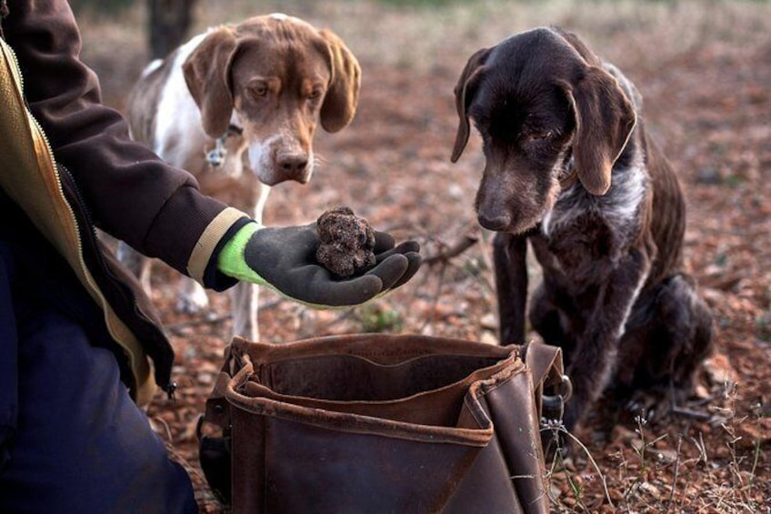 Show item 1 of 12. Truffle Hunting in Padna, Slovenia: Lunch & Wine included