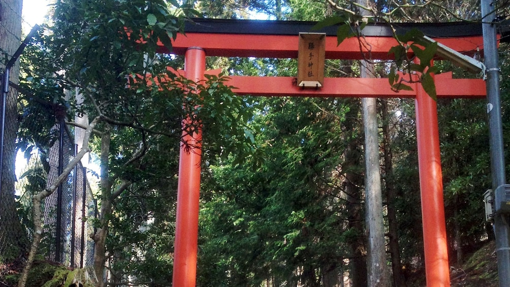 Show item 5 of 5. A red torii gate surrounded by forest in Kyoto