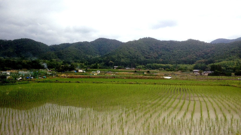 Show item 5 of 7. A view of rice fields and mountains in Kyoto