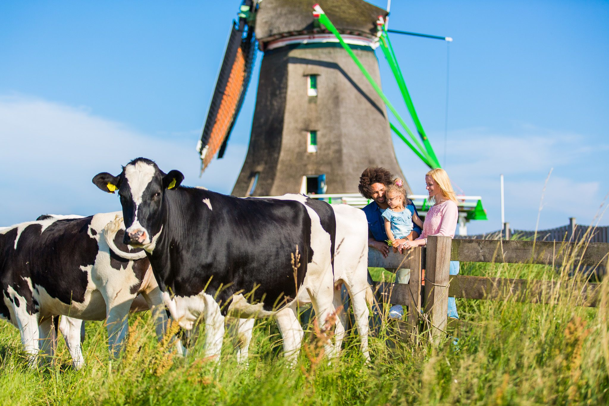 Charm of Holland - All-inclusive Day Trip from Amsterdam