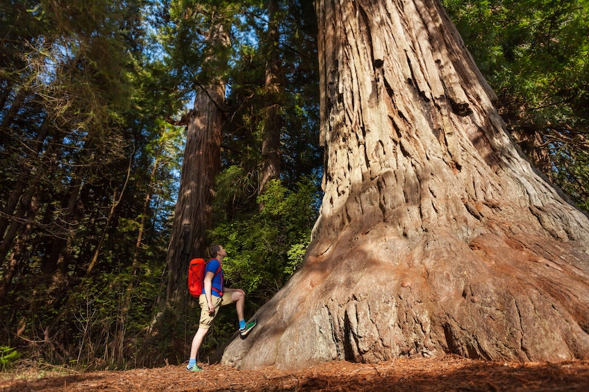 Total Yosemite Experience with Giant Sequoias