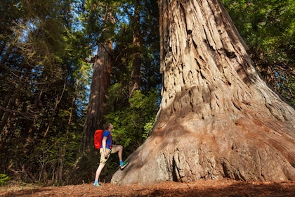 Yosemite Giant Sequoias.jpg