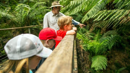 Tour guide pointing out some local wildlife in a forest in Illawarra