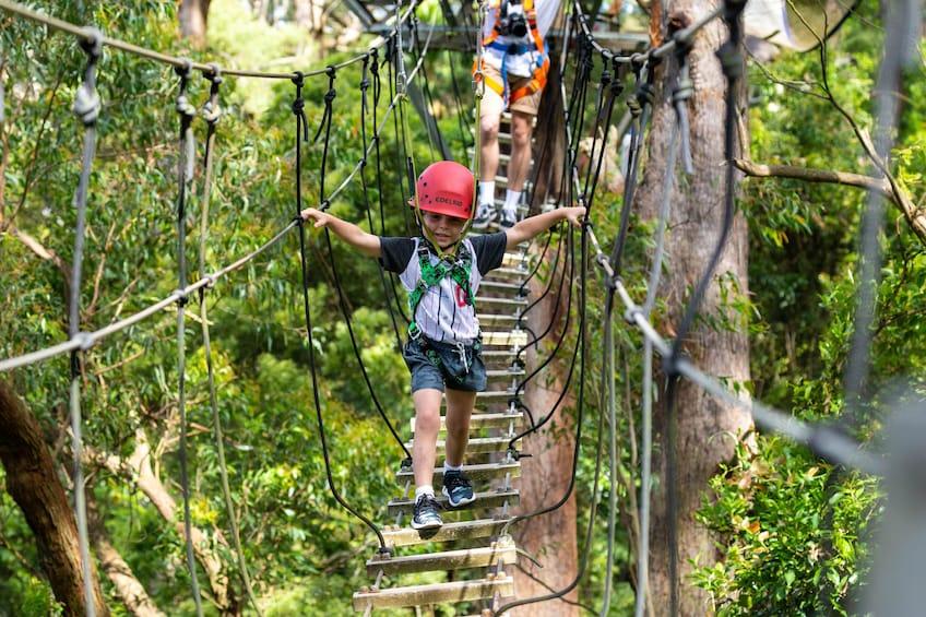 Activity Illawarra Zip Line Adventure Tour