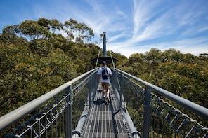 Illawarra Fly Treetop Adventures-Zipline Tour & Treetop Walk