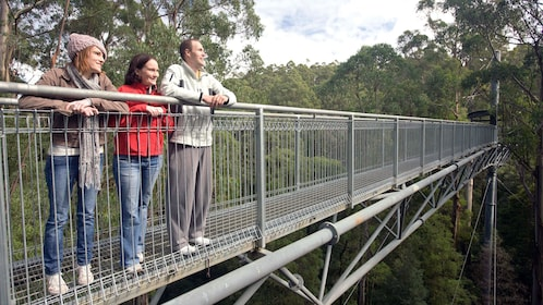 A small group of people on a bridge towering above the canopy of a rainforest in Illawarra