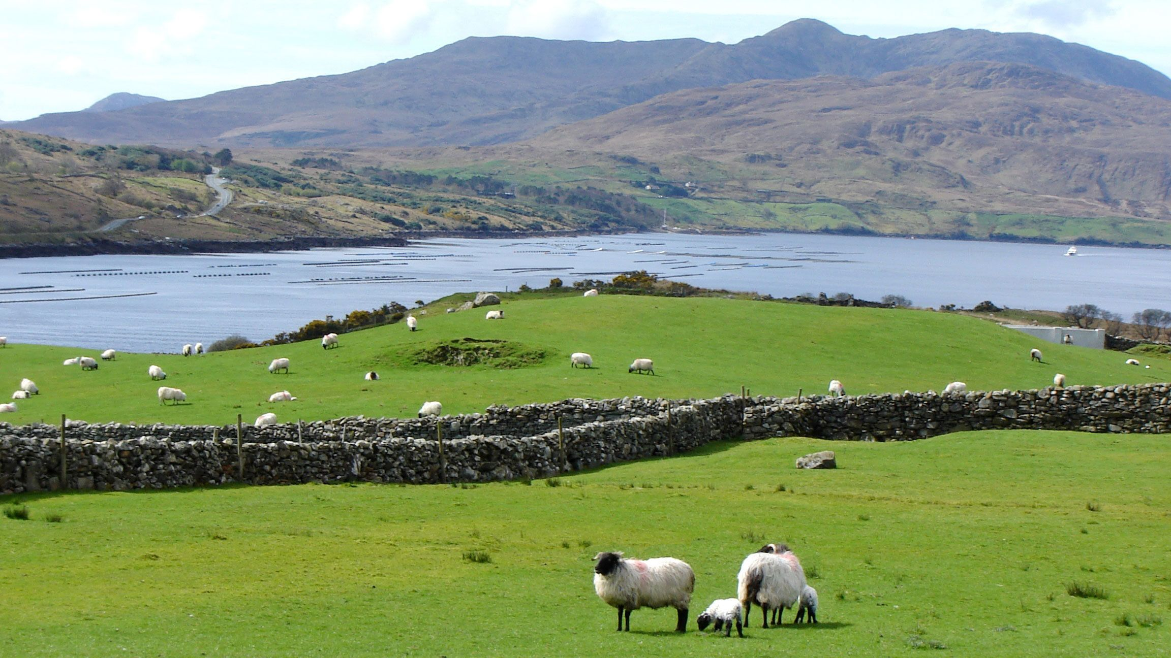Connemara Full-Day Tour