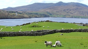 Connemara, Killary, Inagh Valley & Galway City Tour