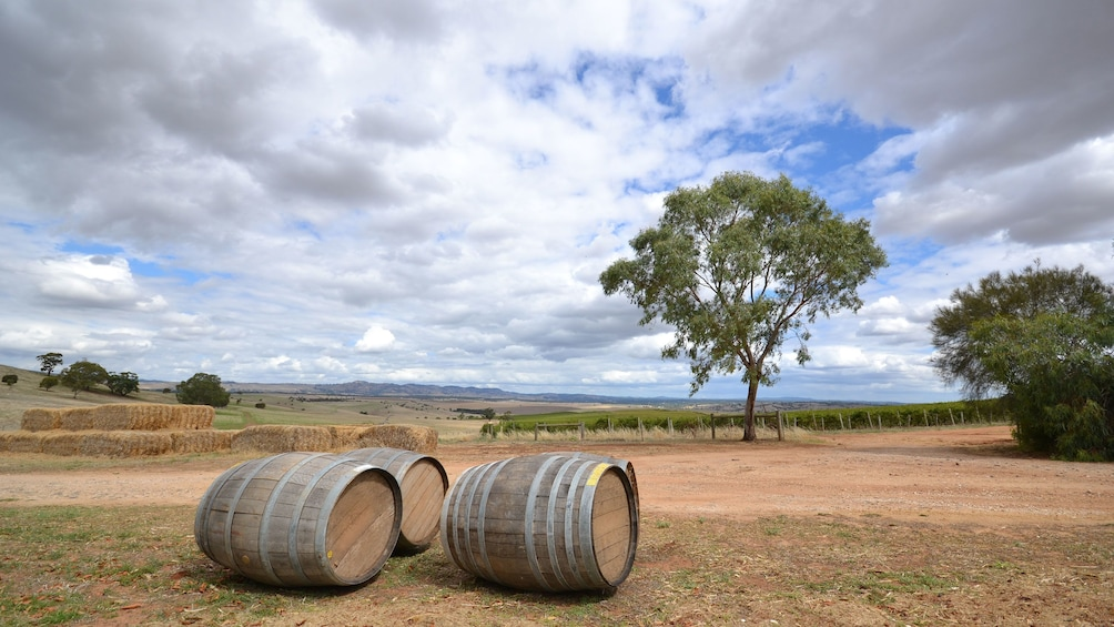 Static wine barrels in the great outdoor for the Barossa Food and Wine Experience in Adelaide.