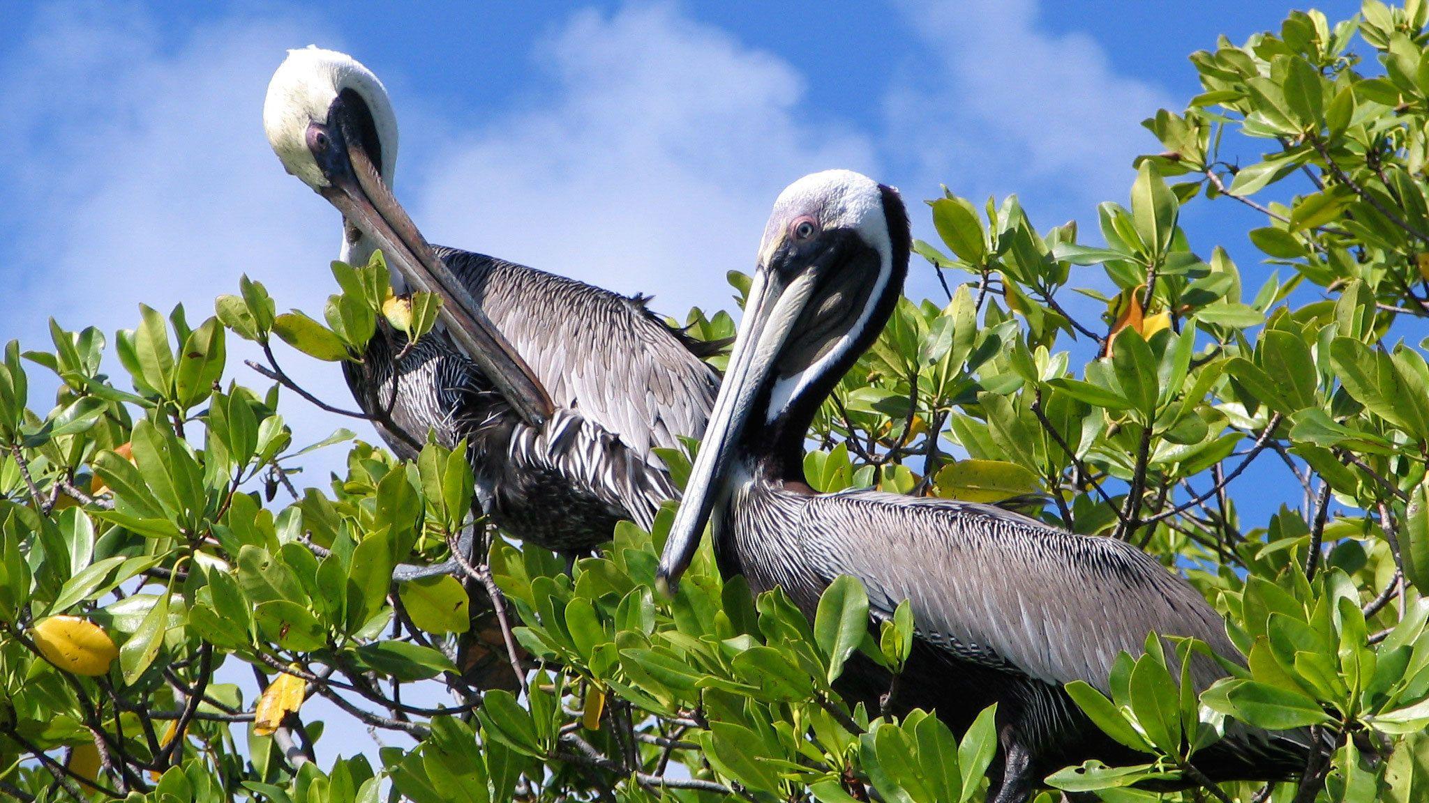 Sunset Kayak Tour to Bird Island