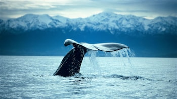 Full-Day Kaikoura Whale-Watching Tour