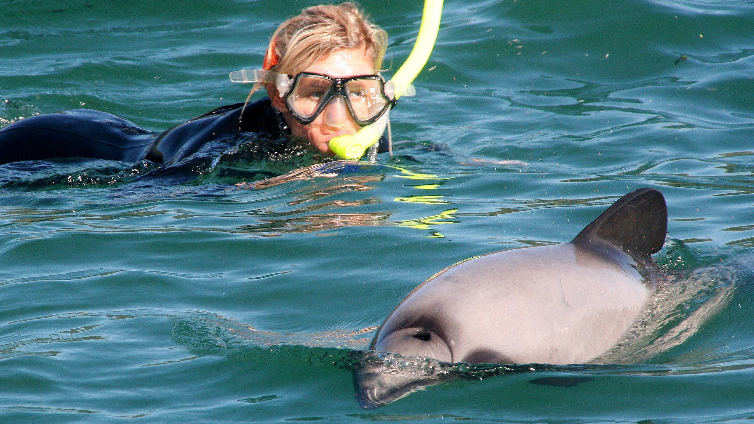 Full-Day Dolphin Swimming Tour Akaroa