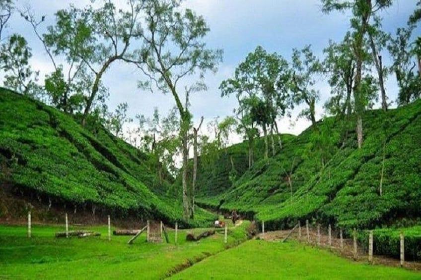 Sreemangal Tour! Sylhet, Bangladesh