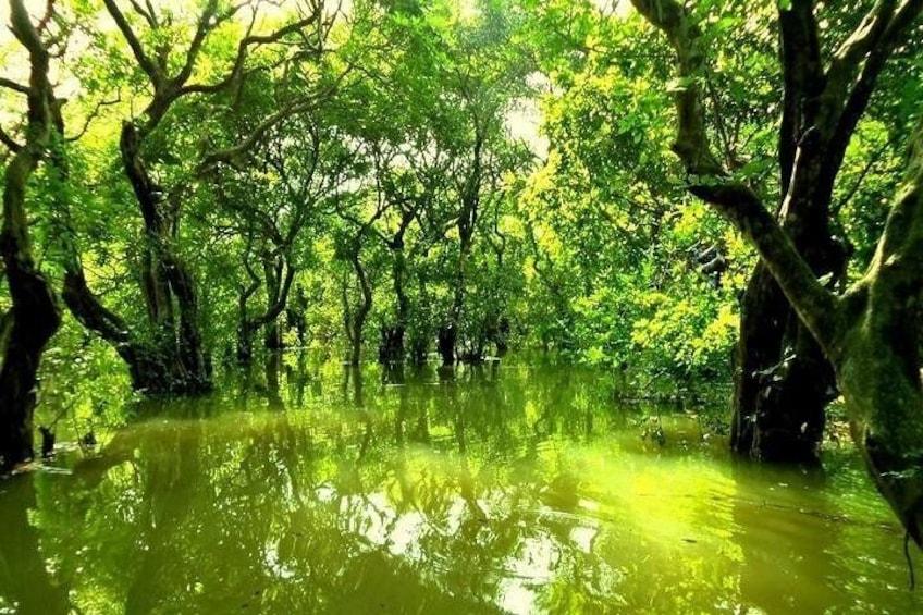 Ratargul Forest