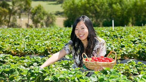 Woman smiling at camera as she picks strawberries