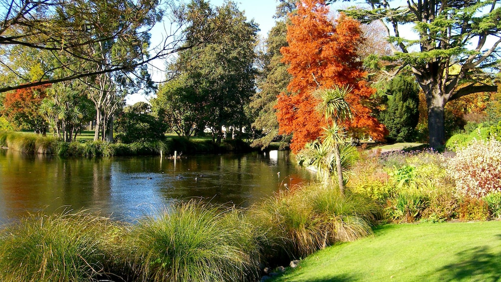 Body of water with blooming trees and flowers in Christchurch City Tour in Christchurch New Zealand.