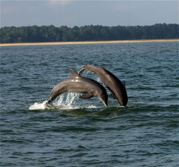 Show item 1 of 5. Dolphin Eco Tour