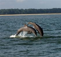 Dolphin Eco Tour