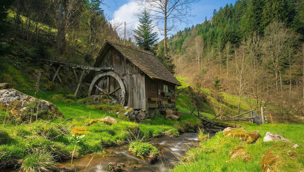 Show item 1 of 6. Culture and Traditions Private Hike through the Black Forest