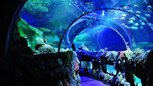 Underwater tunnel with colorful fish at the Sea Life aquarium in Charlotte