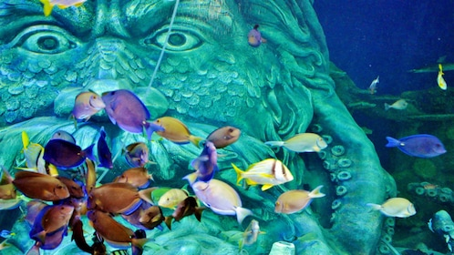 Colorful fish at the Sea Life aquarium in Charlotte