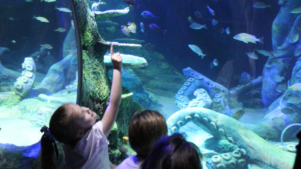 Show item 3 of 10. Children looking at fish at the Sea Life aquarium in Charlotte