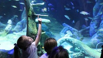 SEA LIFE Aquarium de Charlotte-Concord