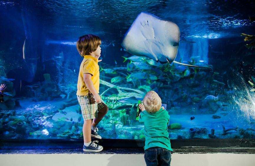 SEA LIFE Charlotte Concord Aquarium