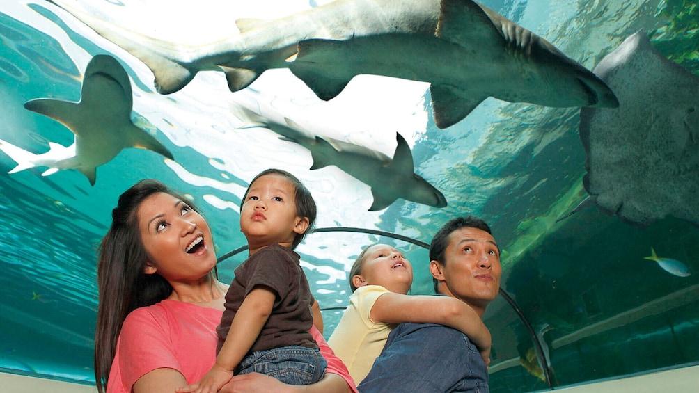 Show item 1 of 10. SEA LIFE Grapevine Aquarium Tickets