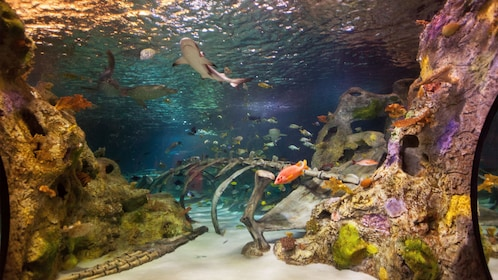 Sharks and colorful fish swimming in a tank at the Sea life aquarium in Dallas