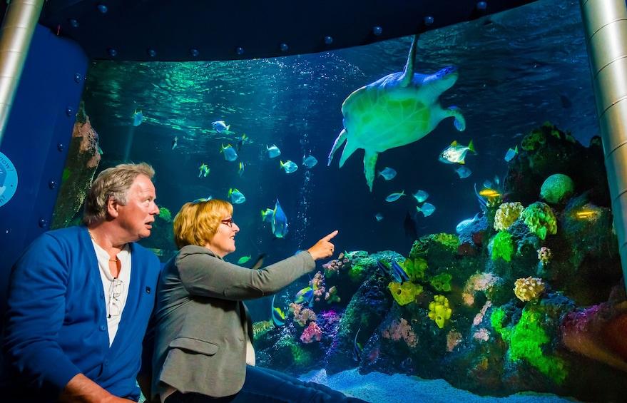 Show item 10 of 10. SEA LIFE Grapevine Aquarium Tickets