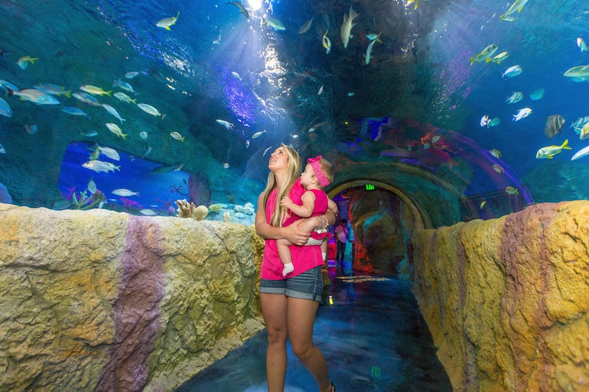 Show item 2 of 10. SEA LIFE Grapevine Aquarium Tickets