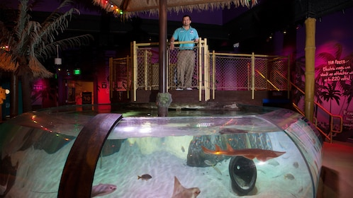 sea life grapevine aquarium dallas expedia. Black Bedroom Furniture Sets. Home Design Ideas