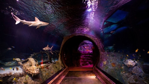 Underwater tunnel with sharks and other fish at the Sea life aquarium in Dallas