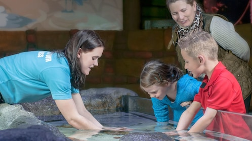 Children experiencing different sea creatures at Sea Life Kansas City
