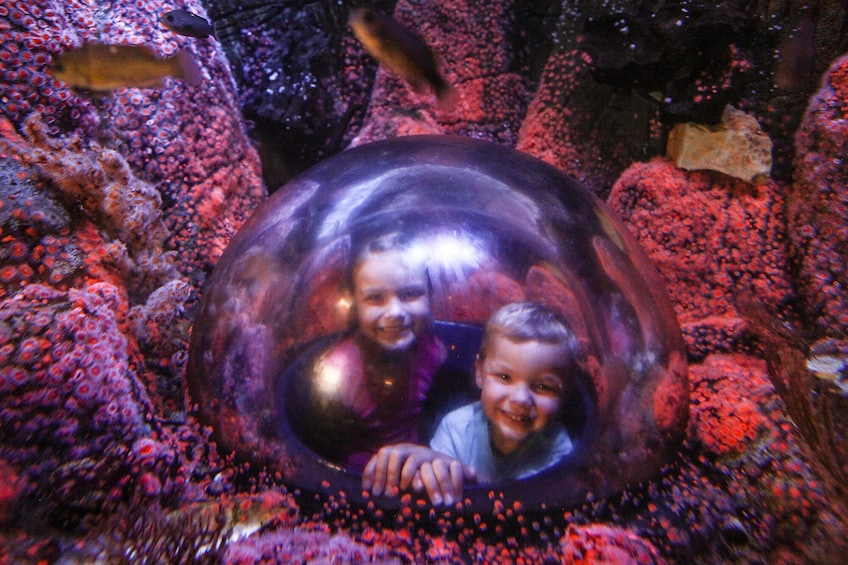Foto 2 von 10 laden SEA LIFE Kansas City Aquarium