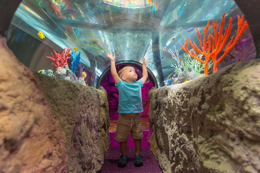 Foto 3 von 10 laden SEA LIFE Kansas City Aquarium