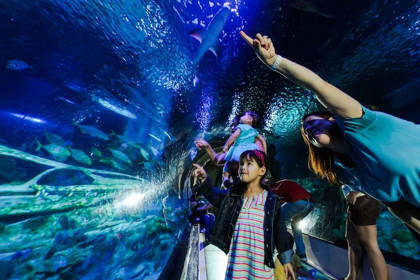 Foto 5 von 10 laden SEA LIFE Kansas City Aquarium
