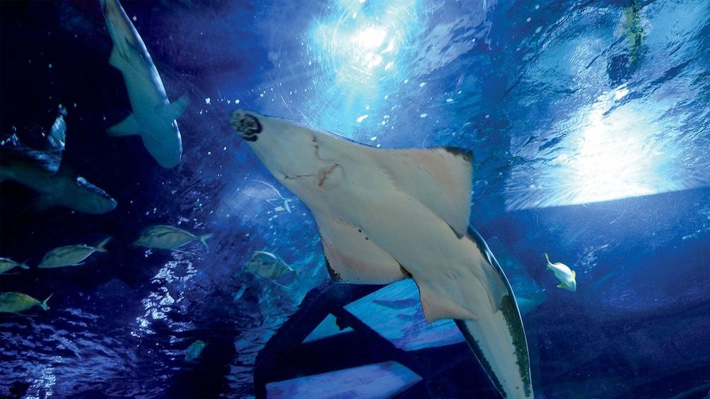 Foto 4 von 10 laden Aquarium inside Sea Life Kansas City