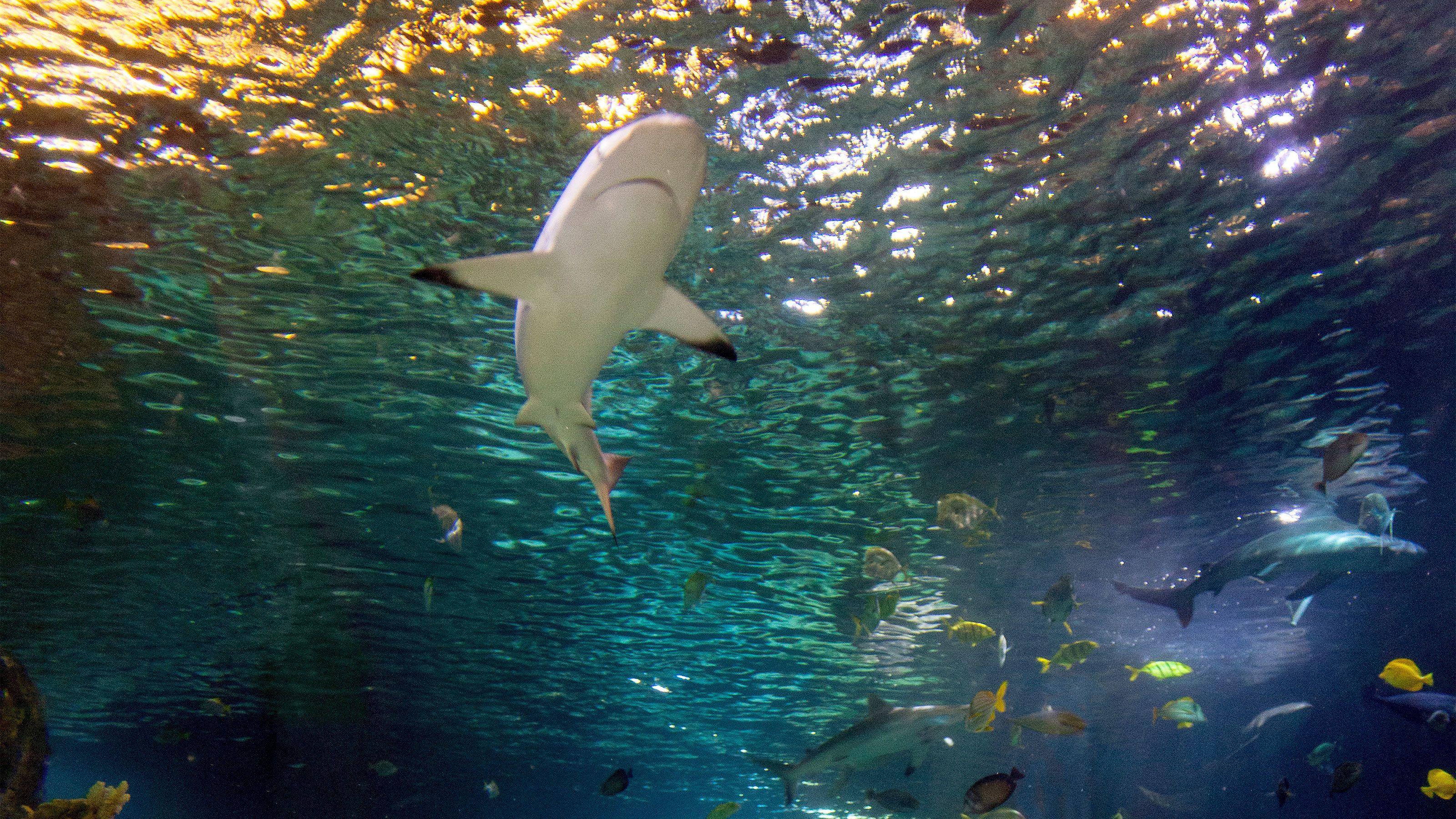 Sharks swimming at the aquarium in Detroit