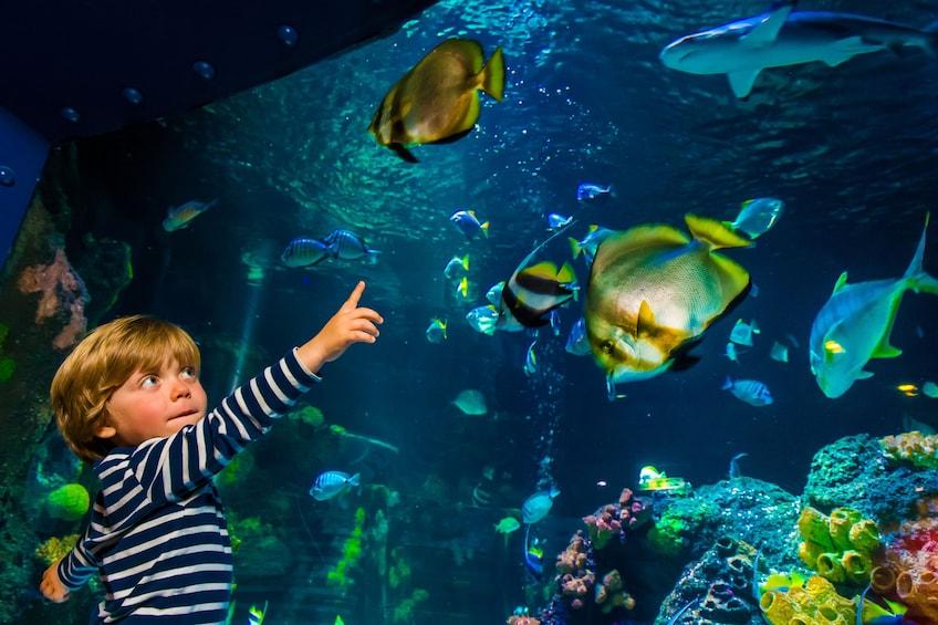 正在顯示第 2 張相片,共 9 張。 SEA LIFE Michigan Aquarium