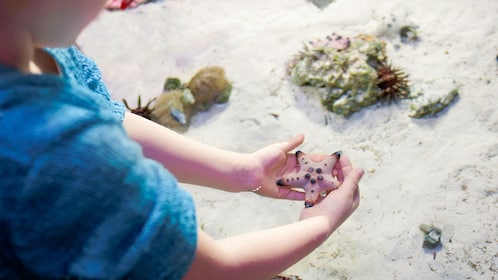 Interacting with starfish at the aquarium in Detroit