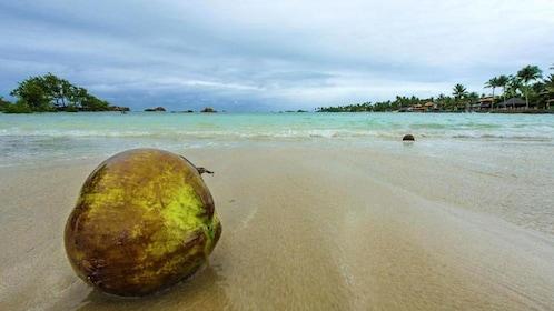 Fallen coconut resting on Morro de Sao Paulo Beach on Tinhare Island
