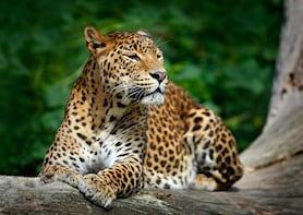 Wilpattu National Park Private Safari with Naturalist