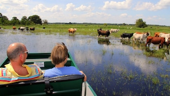 Private Wild Florida Airboat Ride