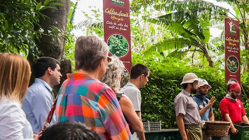 Coffee plantation workers talking about the lifecycle of coffee fruit to a tour group in San Jose