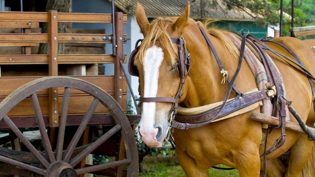Cargar ítem 1 de 9. Close view of a horse at the Estancia Santa Susana in Buenos Aires
